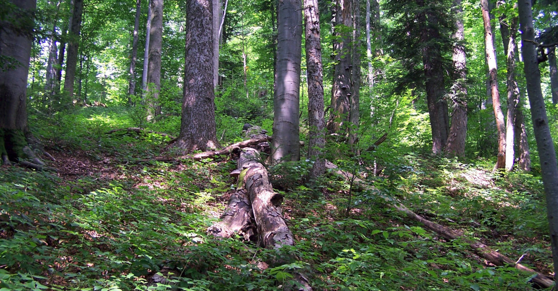 Destruction des forêts primaires en France